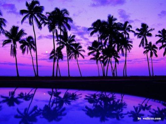 紫_180125_0042.jpg