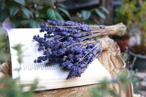 紫_180125_0066.jpg