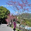 中部賞櫻 435.jpg