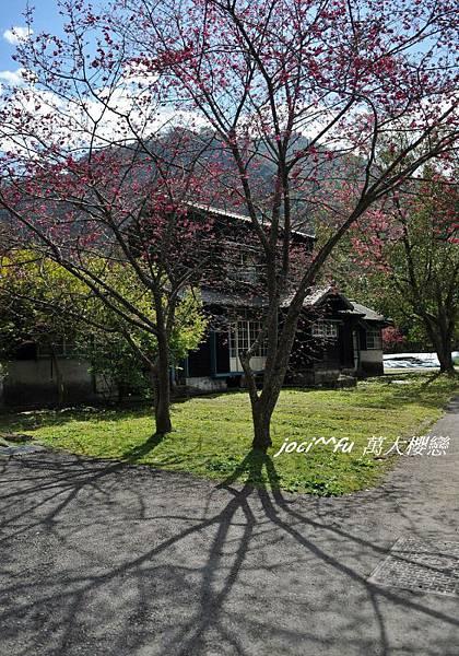 中部賞櫻 746.jpg