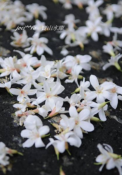 新竹 077.jpg