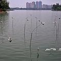 澄清湖 029 - 複製.jpg