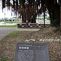 衛武營都會公園 154.jpg