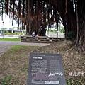 衛武營都會公園 155.jpg