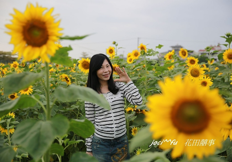 橋頭花海 052.jpg