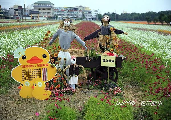 橋頭花海 146.jpg