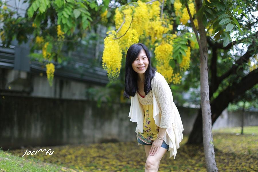 黃金雨 052.JPG