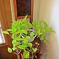 植物染 006.JPG