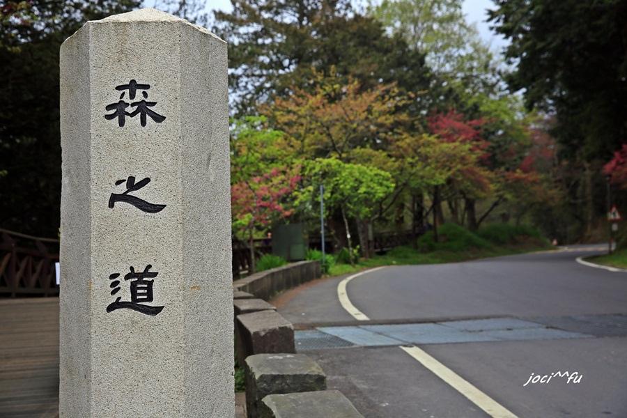 阿里山賞櫻 147.JPG