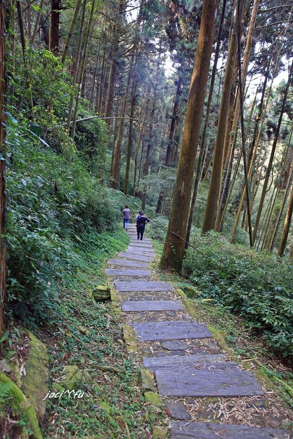 阿里山賞櫻 301.JPG