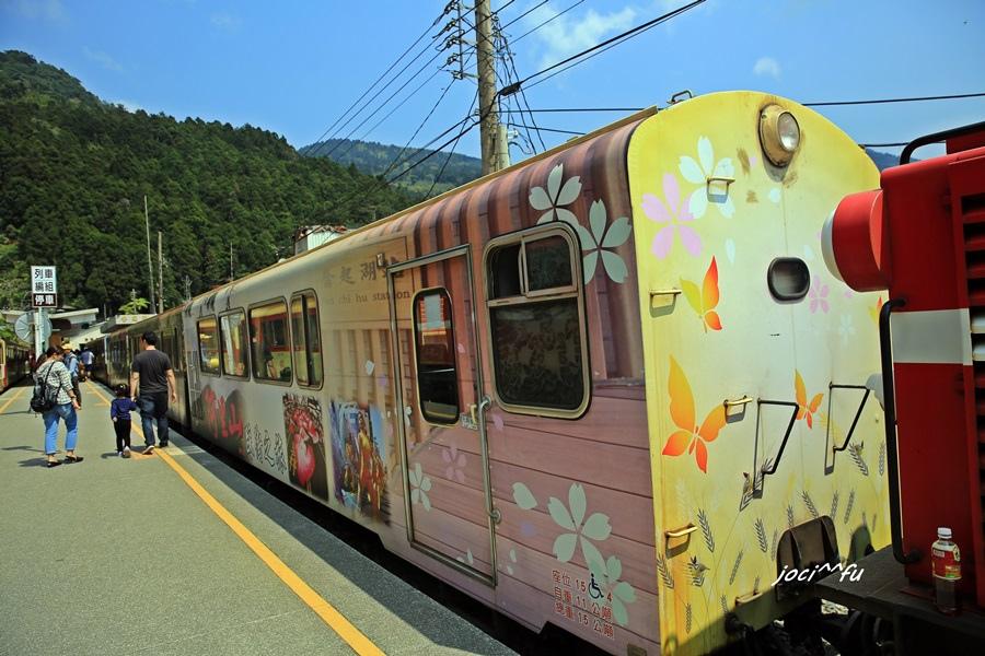阿里山賞櫻 381.JPG