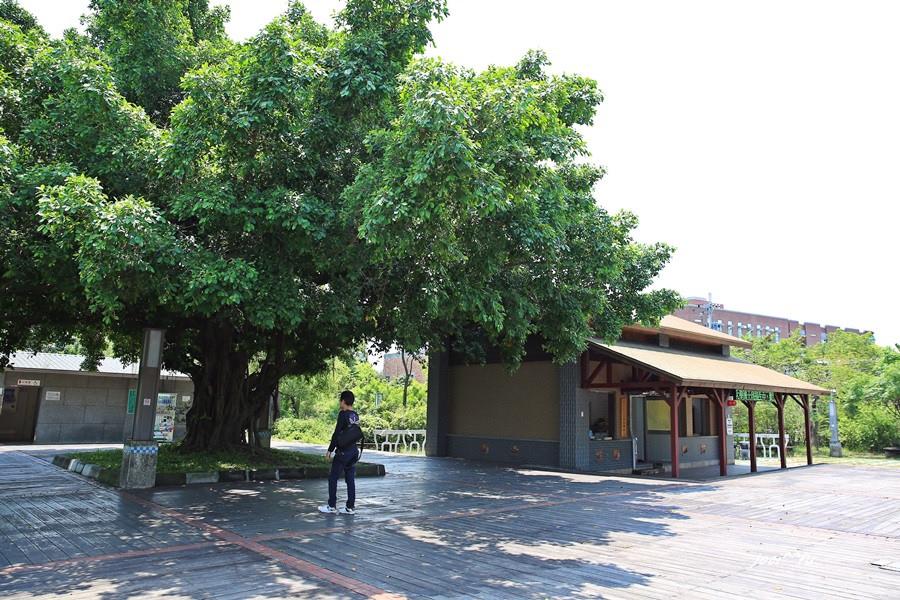 大樹 002