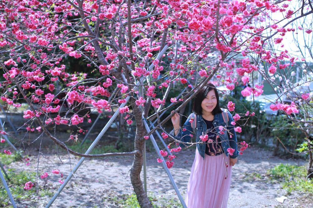 嘉義黃花風鈴木-1-5.jpg