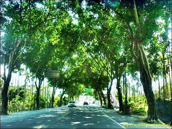 集集-綠色隧道