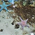 海洋公園_9a.jpg