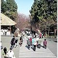 九族文化村-櫻花步道