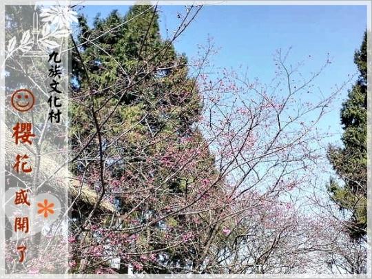 九族文化村-櫻花