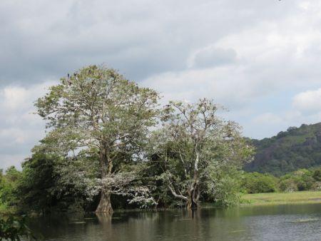 2015斯里蘭卡