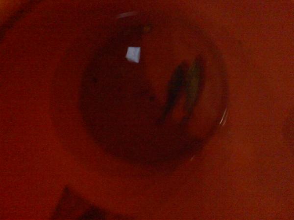 塑膠桶內的二條魚(拔拔的戰利品)