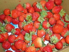08.12.14 採草莓之成果