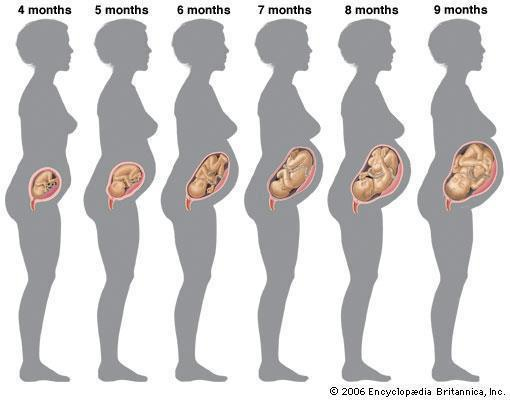 懷孕4-9個月圖