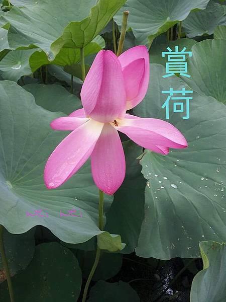 CYMERA_20150524_194759.jpg