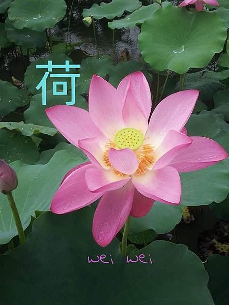 CYMERA_20150524_195411.jpg