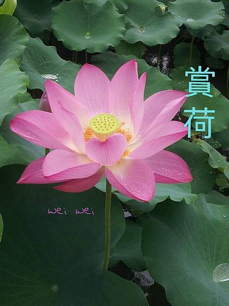 CYMERA_20150524_195657.jpg