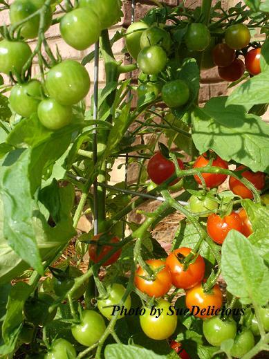 veg_garden2.jpg