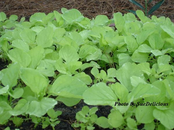 veg_garden8.jpg