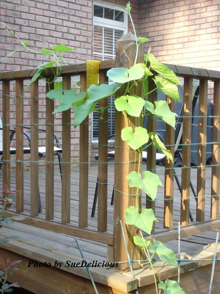 veg_garden10.jpg