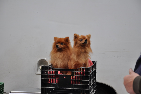 Amboise 早市內的可愛狗狗