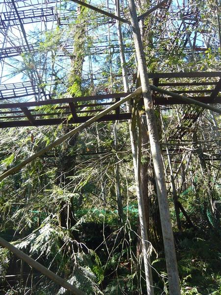 這種植物樹木是保育的,因為是台灣鳳蝶只吃這種葉子