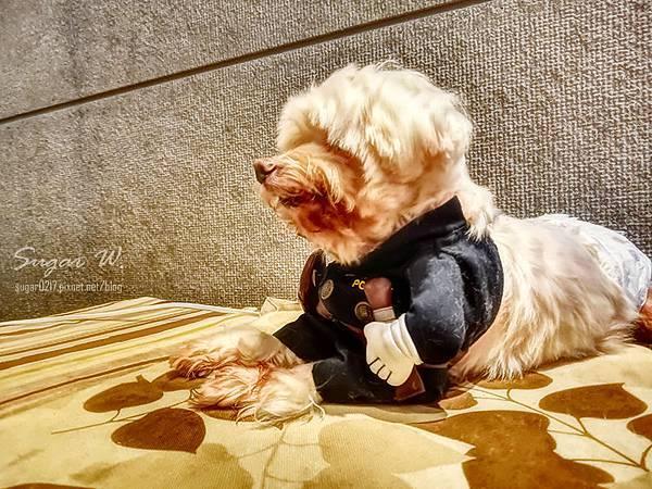 小春日和 動物雜貨 寵物 毛小孩 珈琲 食記 貓 狗