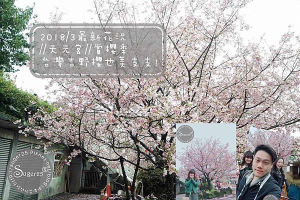 天元宮賞櫻 34.jpg