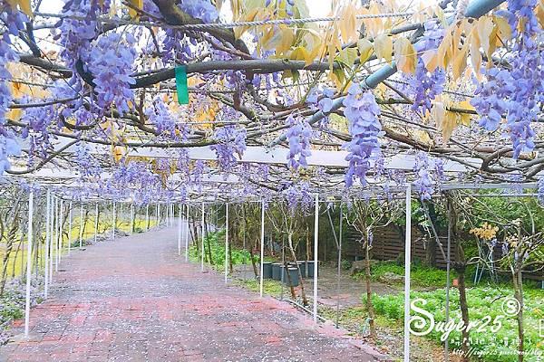 紫藤花咖啡23.jpg