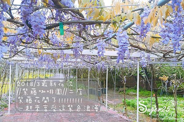 紫藤花咖啡60.jpg