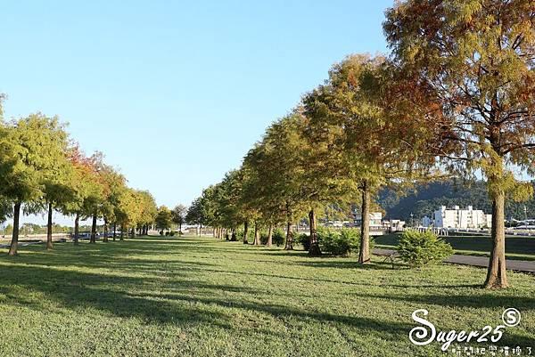 宜蘭季節限定景點落羽松05.jpg