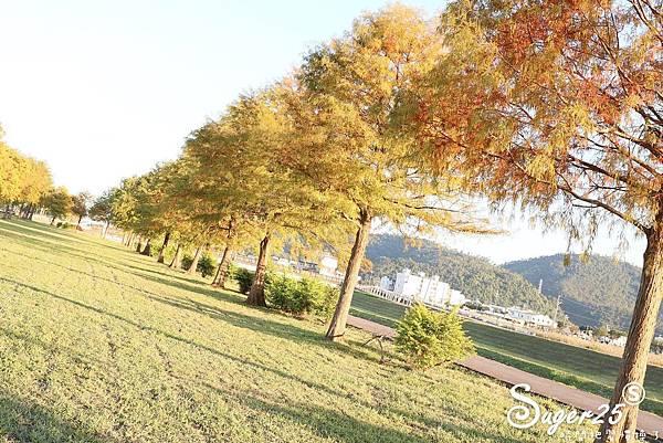宜蘭季節限定景點落羽松18.jpg