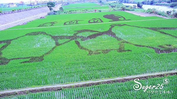 宜蘭壯圍稻田裝置藝術看稻壯圍彩繪田1.jpg