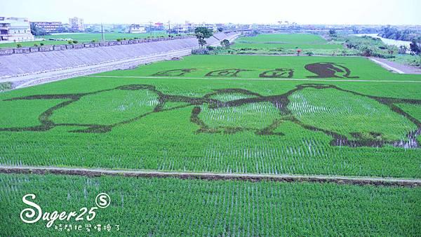 宜蘭壯圍稻田裝置藝術看稻壯圍彩繪田2.jpg