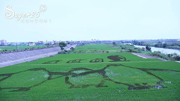 宜蘭壯圍稻田裝置藝術看稻壯圍彩繪田3.jpg