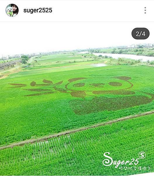宜蘭壯圍稻田裝置藝術看稻壯圍彩繪田6.jpg