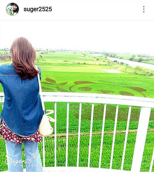 宜蘭壯圍稻田裝置藝術看稻壯圍彩繪田7.jpg