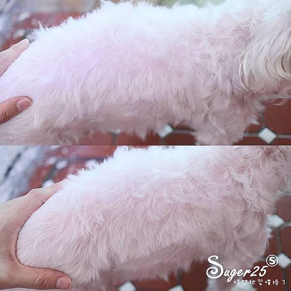 sipet矽寵礦物能量植萃全效寵物洗毛劑13.jpg