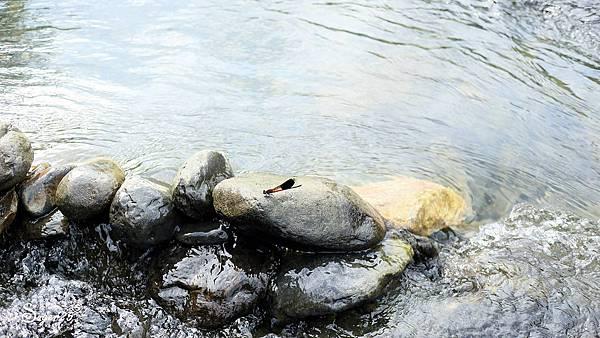 宜蘭景點礁溪免費玩水25.jpg