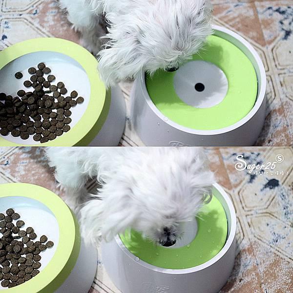 yogipet寵物碗水碗5.jpg