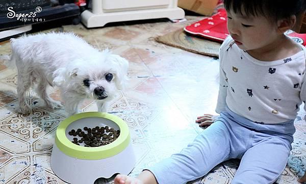 yogipet寵物碗水碗18.jpg