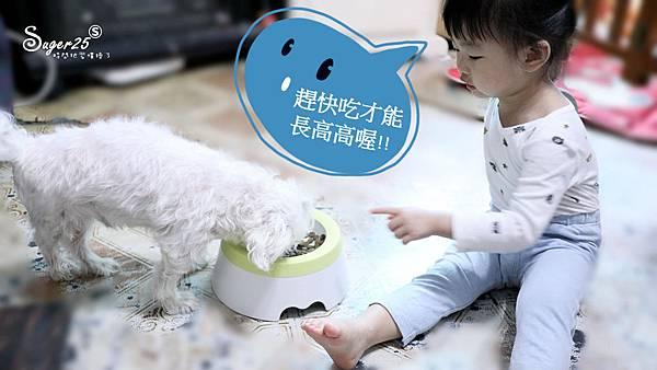 yogipet寵物碗水碗19.jpg