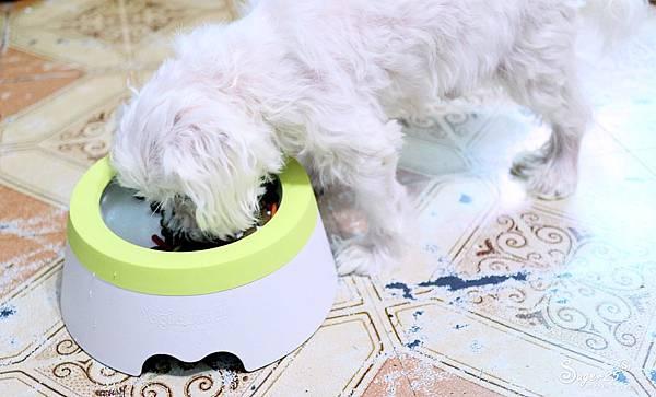 yogipet寵物碗水碗16.jpg